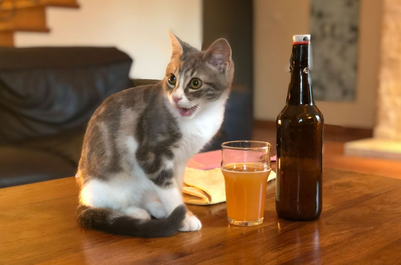 Bière Bug's home-brewed NEIPA, and Barley the cat